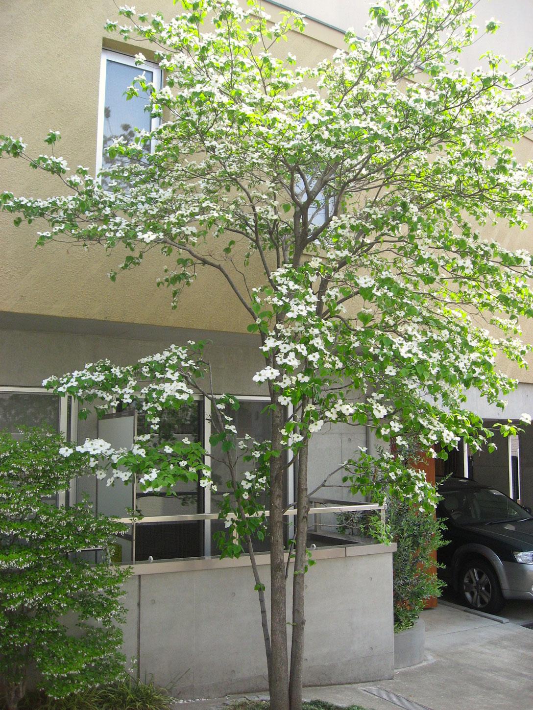 シンボルツリー(植物1)