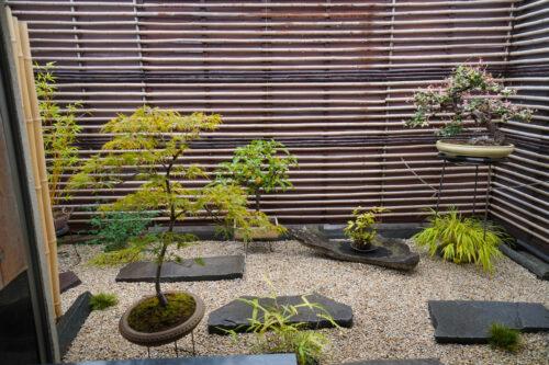 坪庭・レンタルの盆栽(植物2)