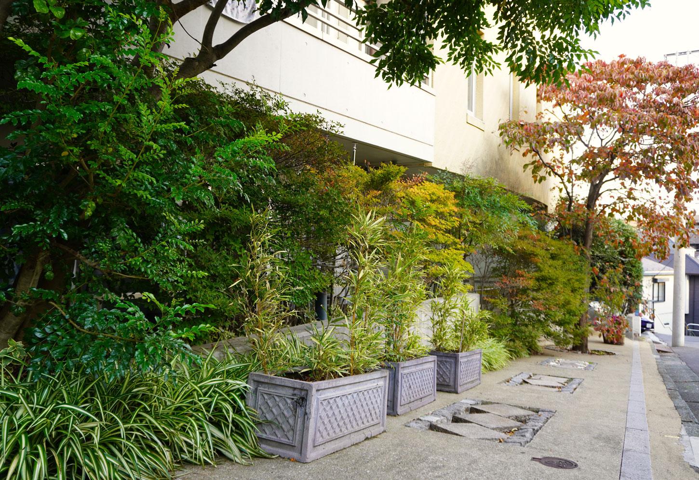 屋外の植栽(植物3)