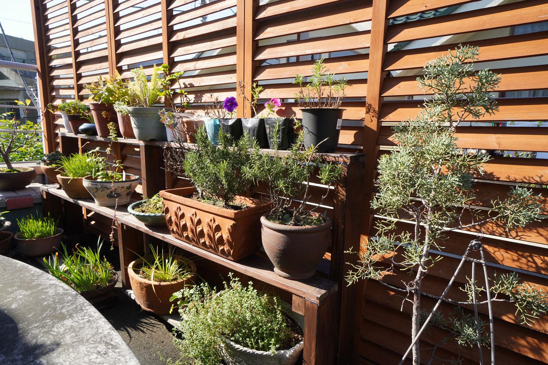 待機植物の置き場所(植物4)